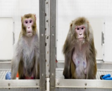 Monkey implanted with 'Neuralink Chip' can now play video games