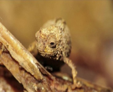 Scientists discover smallest reptile on earth